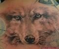 все тот же волк...